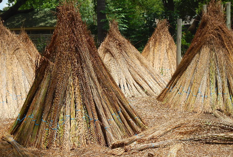 Thatching Company That Sells Cape Reed